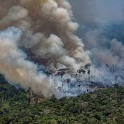 Vérités et contre-vérités sur les incendies géants