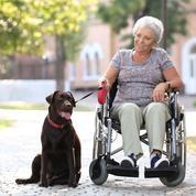 Zoothérapie: ces animaux au chevet des patients
