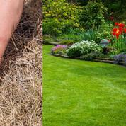 Comment redonner vie à son jardin après un été de braise