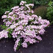 Un hortensia exceptionnel primé au Salon du végétal