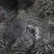 «Carnage derrière le grillage», la chasse en captivité dans le viseur d'une association