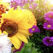 Comment garder son jardin fleuri tout l'automne
