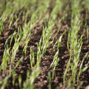 «Recourir aux pesticides est parfois nécessaire»