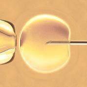 Ce que contient la loi de bioéthique