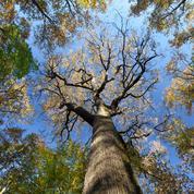Plus de la moitié des espèces d'arbres menacées de disparition en Europe