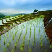 Des végétaux capables de pousser en terrain inondé?