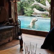 Tigres, ours, watusis... Nuit insolite dans un parc animalier