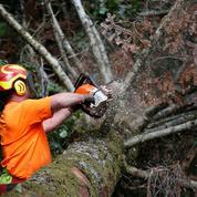 La grande inquiétude de la filière bois
