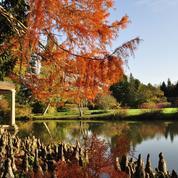 L'avenir incertain des arboretums et du patrimoine végétal