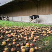 Rouen: aliments autorisés, mais surveillés