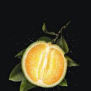 Les vigoureux effluves de l'orange