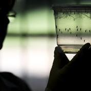Dengue et zika: de plus en plus de cas contractés en métropole