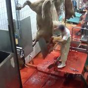 Les vidéos, un support lucratif pour les associations de défense du bien-être animal