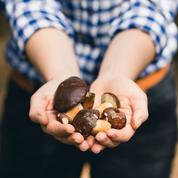 Cueillette de champignons: près de 500 cas d'intoxication en deux semaines