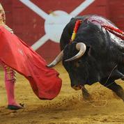 Matthieu Ricard: «Pourquoi il faut préserver enfants et adolescents du spectacle cruel de la corrida»