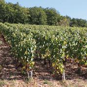 Investir dans la vigne, pour s'ancrer dans le terroir