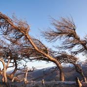 Après trente ans de baisse, les vents forcissent