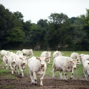 «Les défenseurs de la cause animale contribuent à la virtualisation de la société»