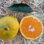 Les étonnants arbres fruitiers de Végétal 85