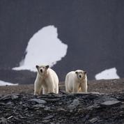 «Terminal F» en immersion dans l'univers arctique