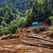 L'huile de palme, l'ingrédient de tous les scandales écologiques