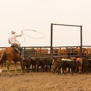 Les éleveurs américains pourront exporter plus de bœuf en Europe
