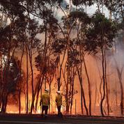 Les feux de brousse ravagent l'Australie