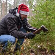 Pour leur sapin de Noël, les Baltes font leur marché, en famille, dans les forêts