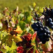 «Le vin n'est pas juste un alcool, c'est un élément culturel»