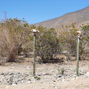 Au Chili, la vallée de la Ligua, asséchée par les riches familles