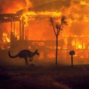 Australie: la catastrophe sans fin