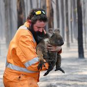 Feux en Australie: des dizaines d'espèces animales poussées vers l'extinction