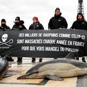 Les dauphins, victimes collatérales de la pêche dans le golfe de Gascogne
