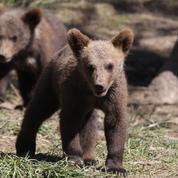 Pyrénées: Emmanuel Macron promet aux éleveurs l'arrêt des réintroductions d'ours