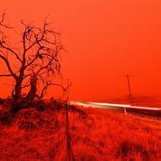 Pourquoi les forêts australiennes brûlent-elles?