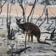 Orages, incendies et chaleurs à venir: le point sur la situation en Australie