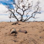 Et toujours les forêts, de Sandrine Collette: la terre morte