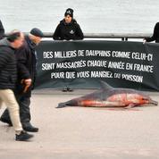 Déjà 600 dauphins échoués sur la côte Atlantique depuis le début de l'année