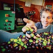 Dans le Gard, une huile d'olive qui ne manque pas de caractère