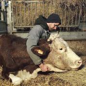 Cyrille, agriculteur, 30 ans, 20 vaches, du lait, du beurre, des dettes :un paysan tombé par terre