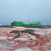 Une mystérieuse neige couleur rouge sang se répand en Antarctique