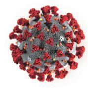 Paranos, hygiénistes, opportunistes... Les sept familles de Français face au coronavirus
