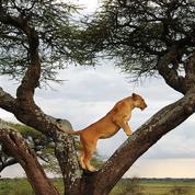 Du Kenya à l'Australie, dix voyages de rêve pour vos prochaines évasions