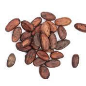 Le mystérieux virus qui menace le cacao