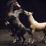 Au centre de la piste avec Bartabas et ses chevaux