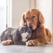 «Le Covid-19 n'atteint pas les chiens et les chats»