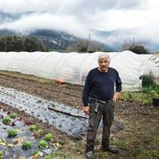 A Saint-Blaise, les maraîchers se réinventent pour survivre