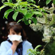 Coronavirus: les personnes allergiques au pollen pourraient être plus sensibles