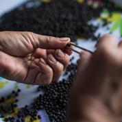 Sur la piste du poivre de Kampot, l'or noir des plaines cambodgiennes