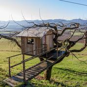 «La cabane, un lieu d'exploration»